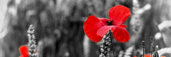 An image relating to Commemorating World War One centenary: Chiltern and South Bucks District Councils small grants scheme