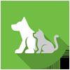 Animal Activity Licences
